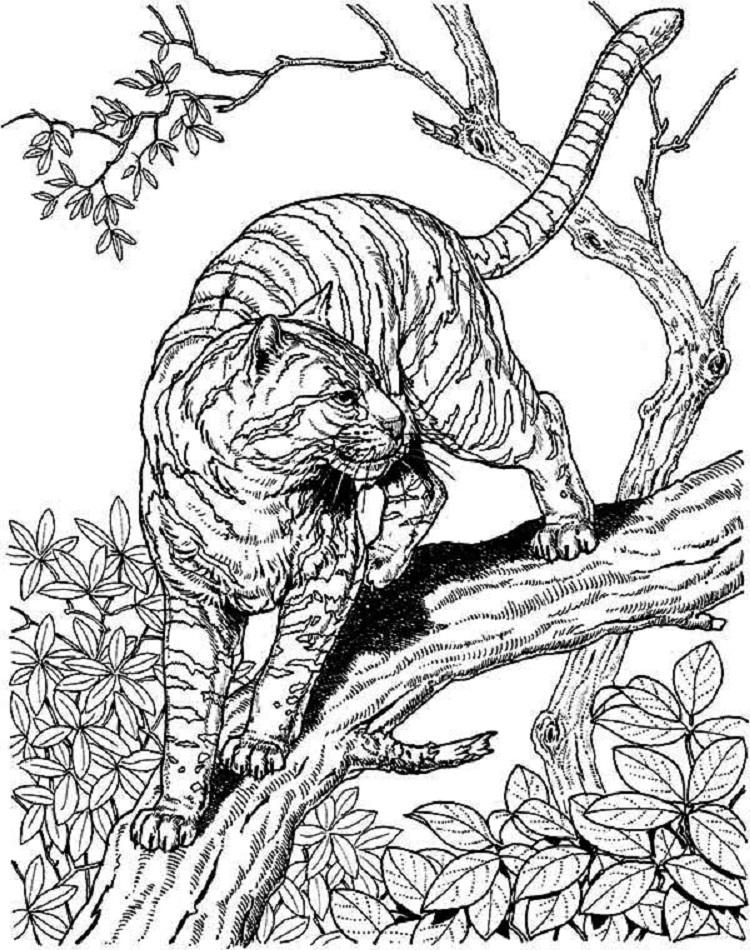 Cat Coloring Pages Hard