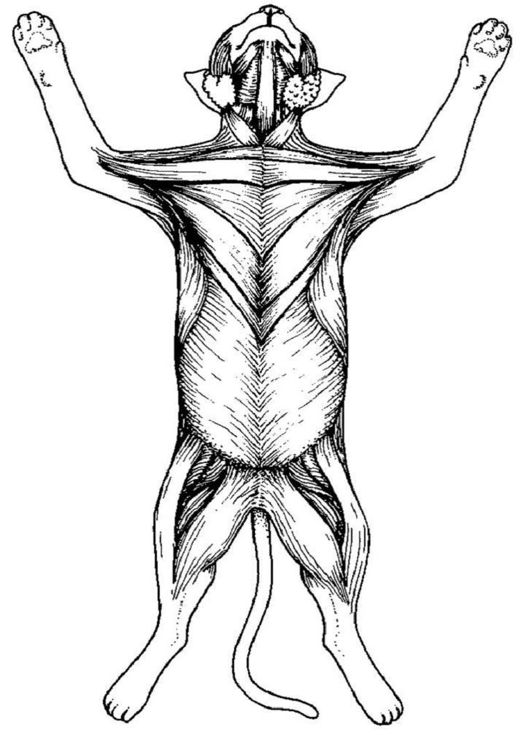 Cat Dissection Coloring Pages