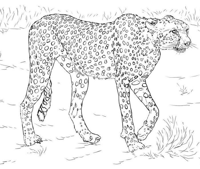 Cheetah Coloring Pages To Print