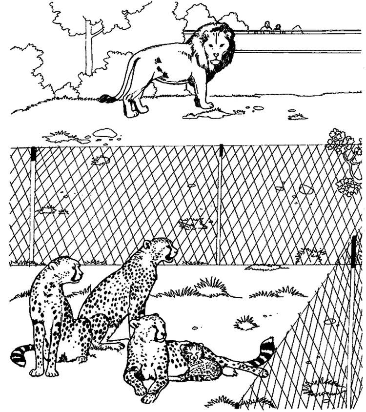 Cheetah Coloring Pages With Lion In Zoo