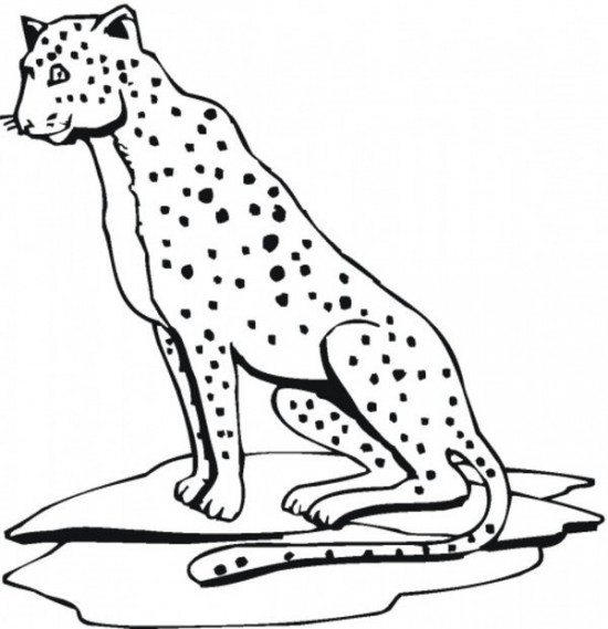 Cheetah Print Out Coloring Pages Animal