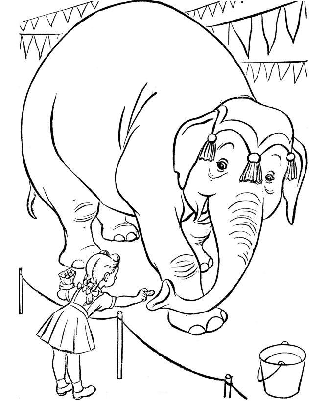 Circus Coloring Pages Feeding Elephant