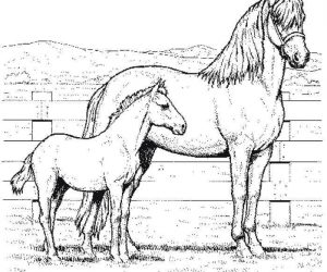 Coloring page of mom and baby horse