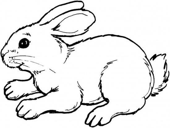 Coloring Pages For Kids Rabbit Animal