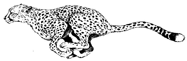 Coloring Pages Of A Cheetah Animal