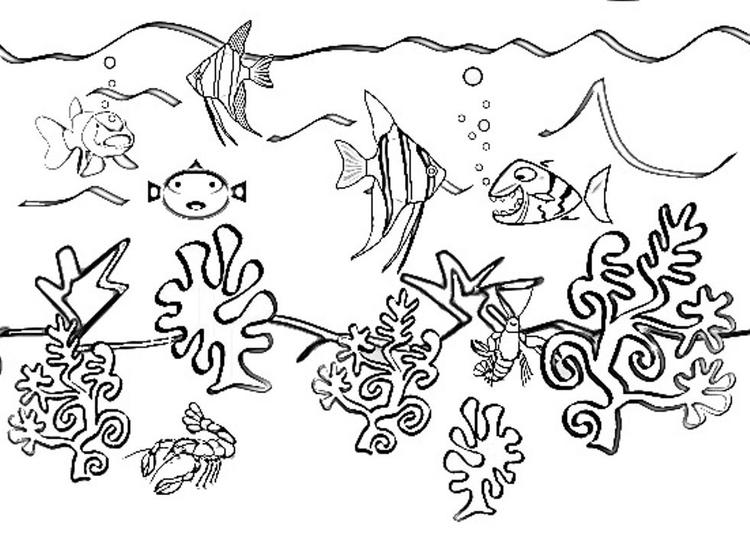 Coloring Pages Of Sea Animals Free