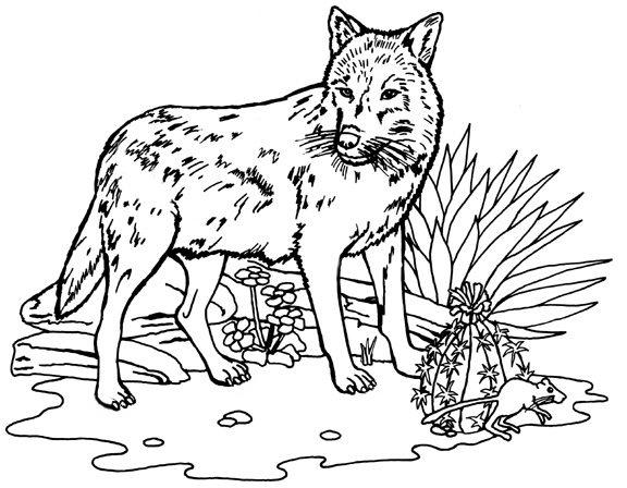 Coloring Pages Of Wolf Activities