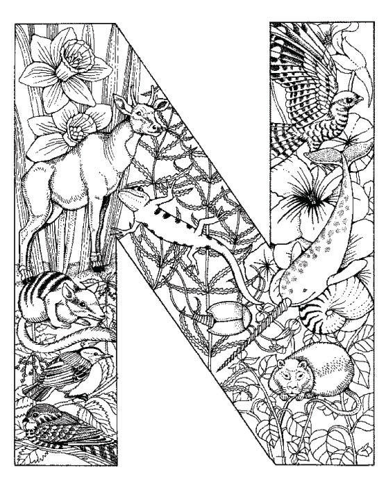 Coloring Pages Animal Plant Abc Alphabet N