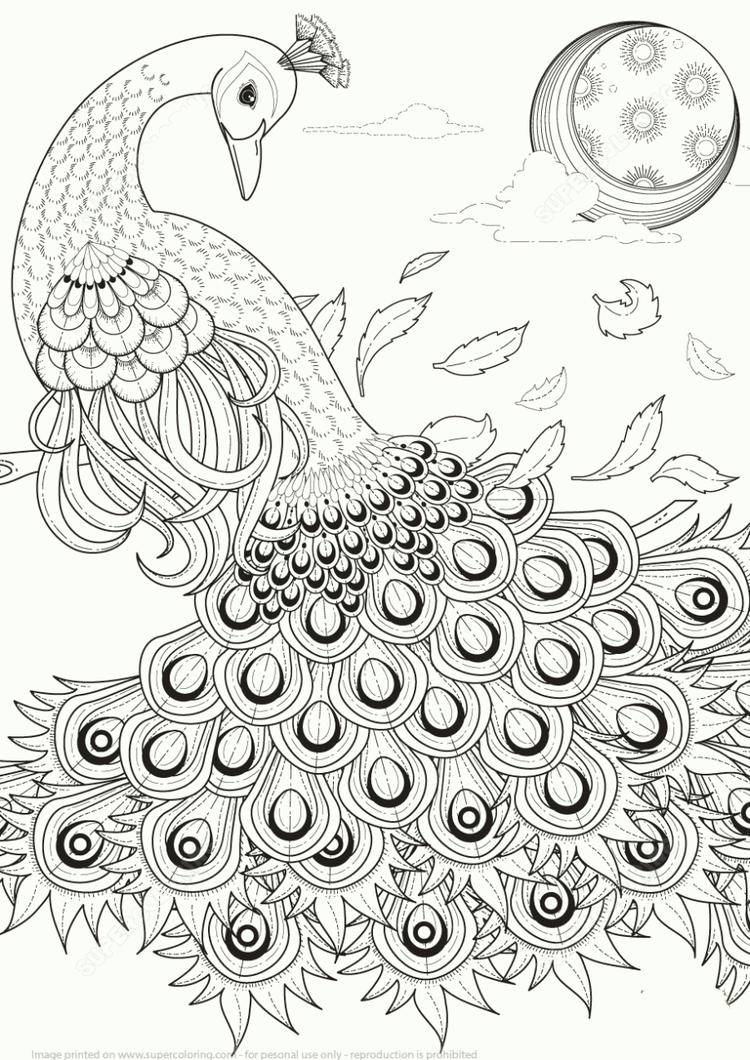 Colourful Peacock Coloring Pages