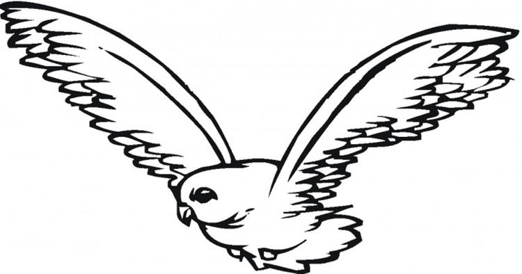 Cool Falcon Bird Coloring Pages