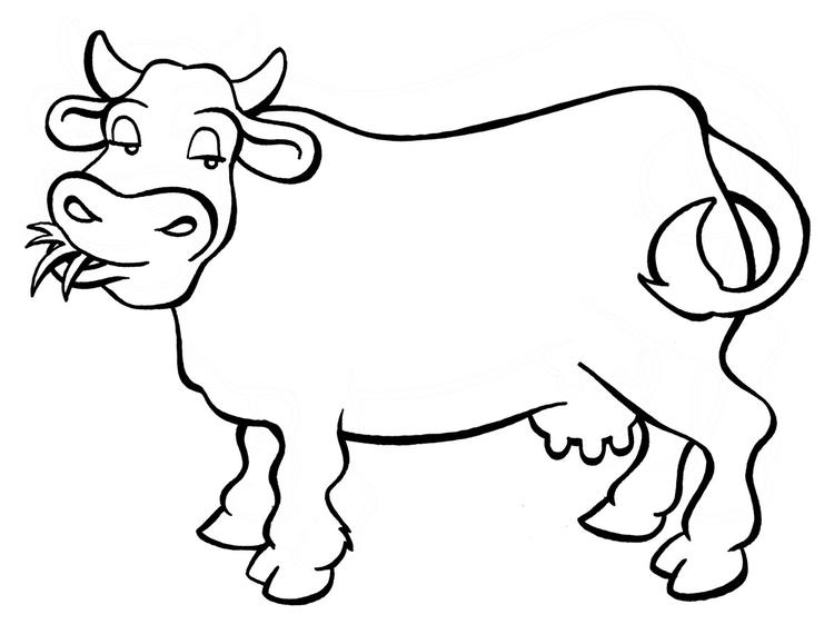 Cow Coloring Pages Eating Grass