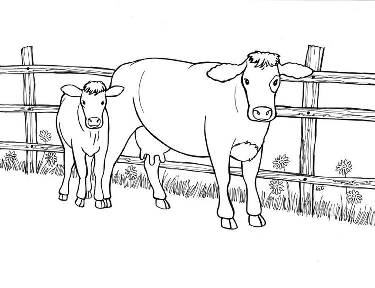 Cow Coloring Pages Mother And Calf