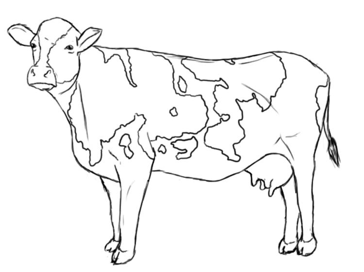 Cow Coloring Pages Printable Coloring Ideas