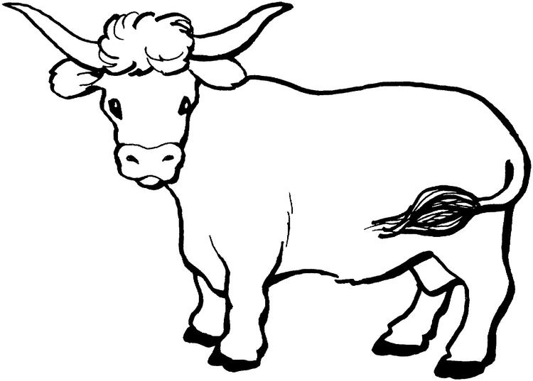 Cow Coloring Pages With Long Horns