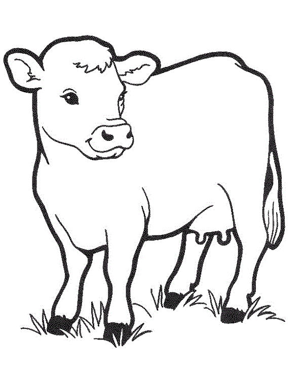 Cow Coloring Printable Page