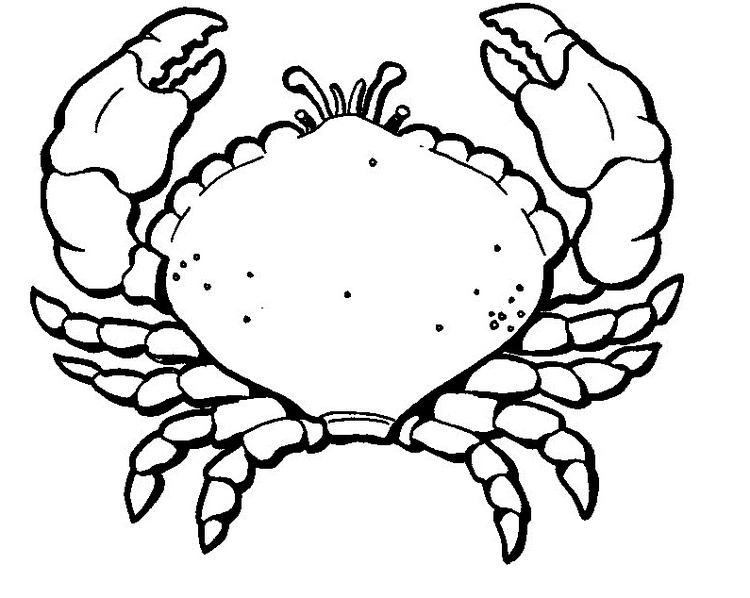 Crab Coloring Pages Free To Print