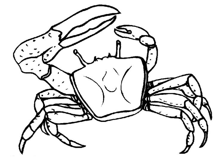 Crab Coloring Pages With One Big Claw