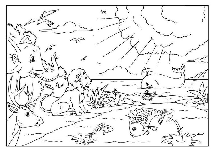 Creation Coloring Pages Printable
