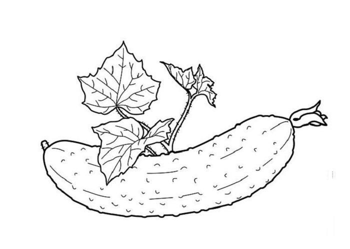 Cucumber Vegetables Coloring Pages