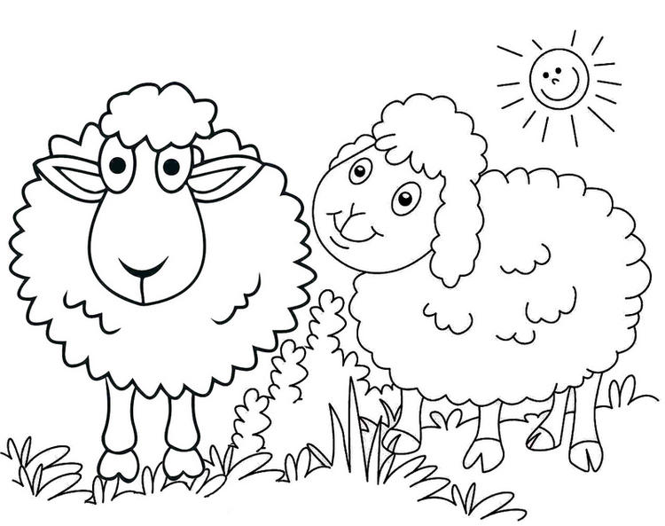 Cute A Couple Of Sheeps Coloring Page