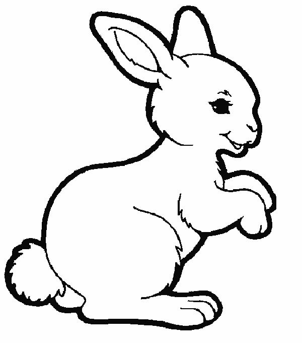 Cute Animal Coloring Pages For Kids Rabbit