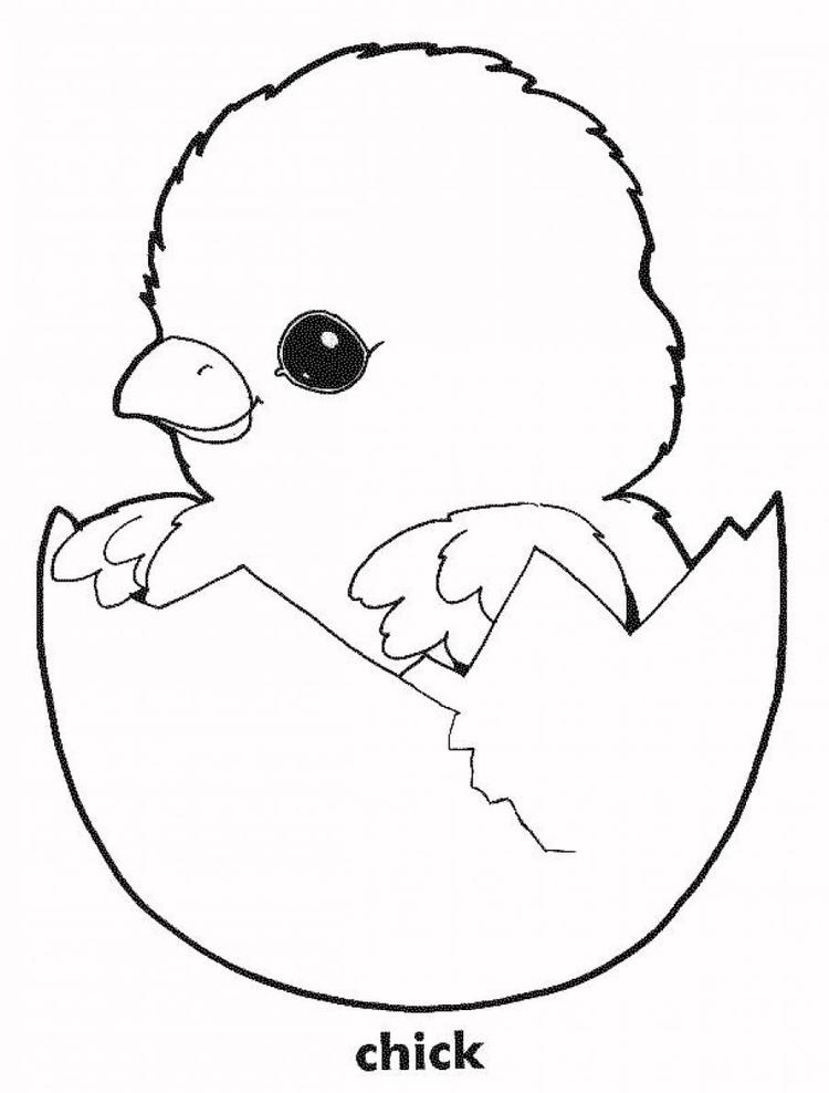Cute Chicken Coloring Pages Chick