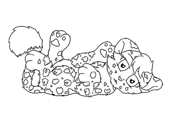Cute Jaguar Cub Want To Play Coloring Pages