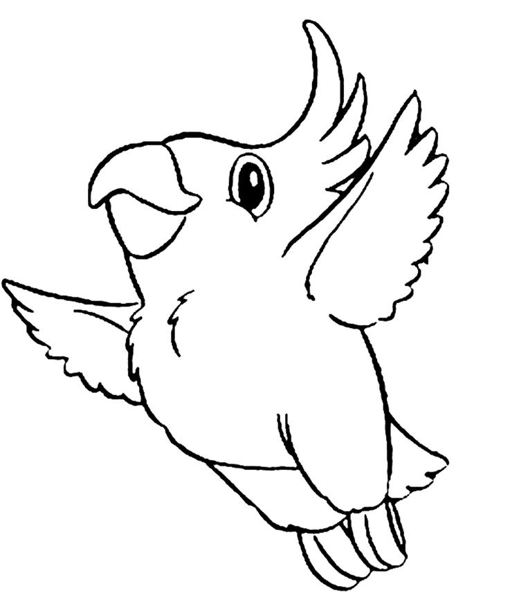 Cute Parrot Bird Coloring Page