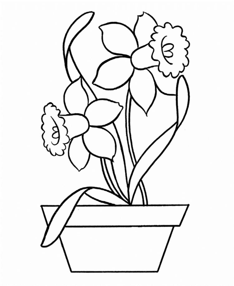 Daffodil Flower Coloring Page