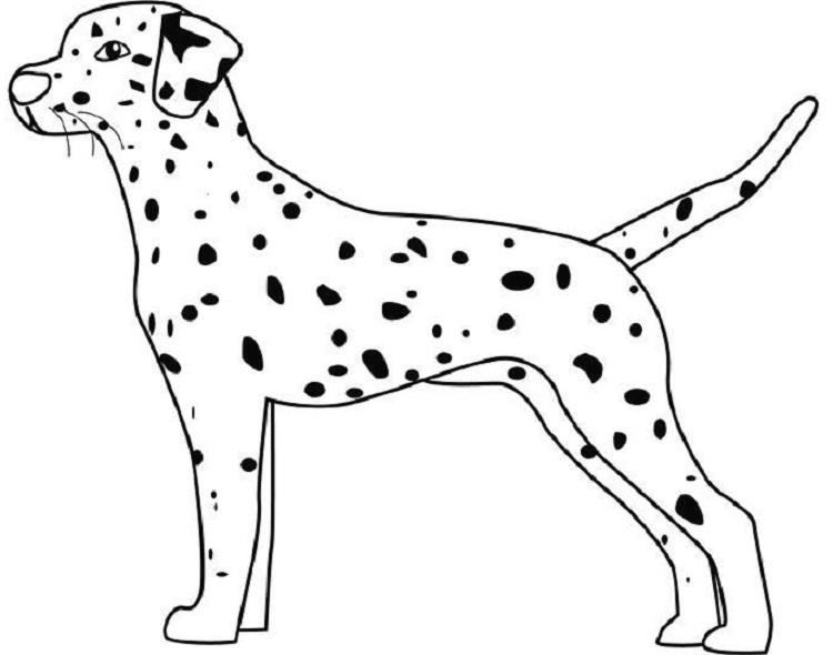 Dalmatian Dog Coloring Pages