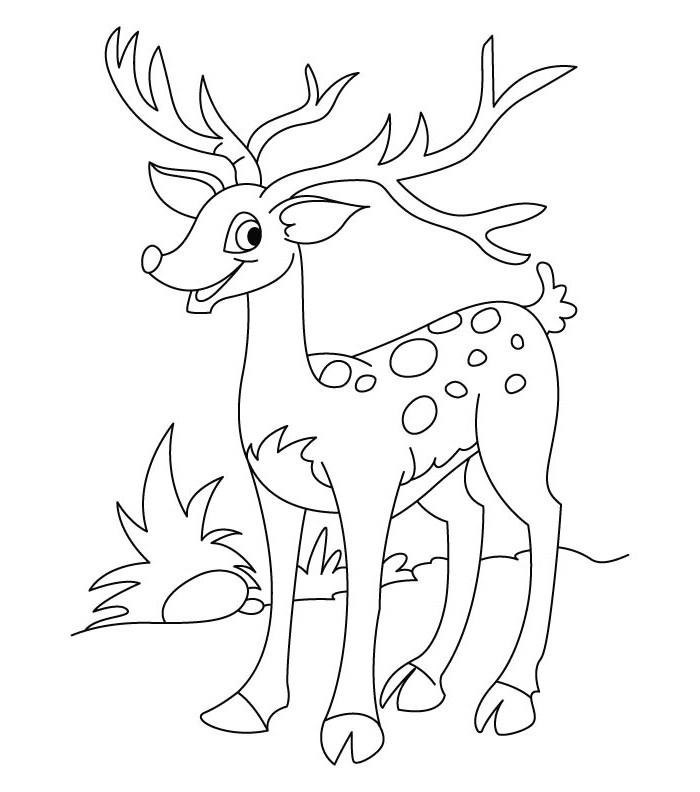 Deer Coloring Pages For Kids Printable