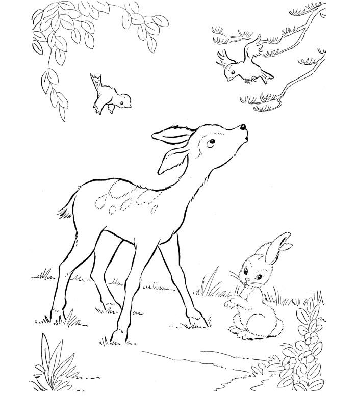 Deer Coloring Pages With Birds And Bunny