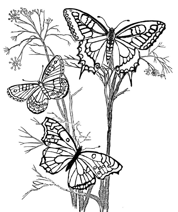 Design Coloring Pages Butterflies