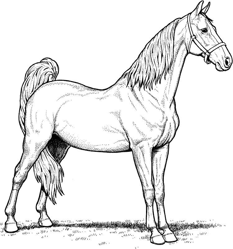 Detailed Horse Coloring Pages