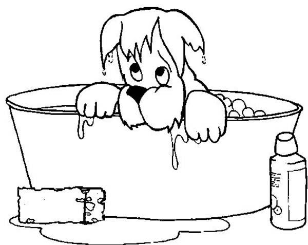 Dog Soaking Wet When He Take A Bath Coloring Pages