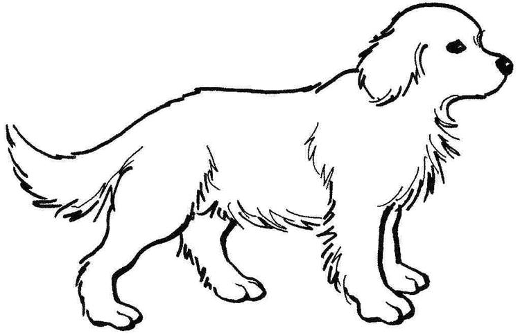 Dogs Preschool Coloring Pages Animals