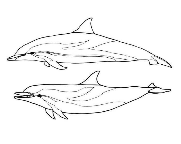 Dolphin Coloring Pages To Print