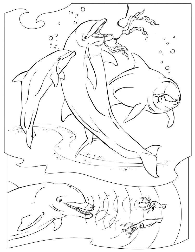 Dolphin Family Coloring Pages