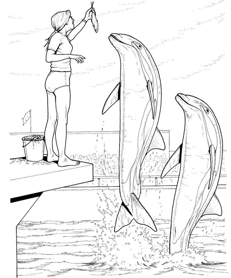 Dolphin Training Coloring Pages