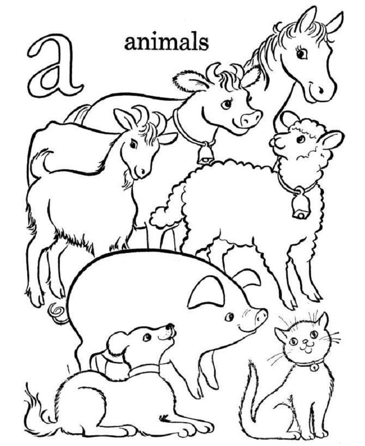 Domestic Animal Coloring Pages