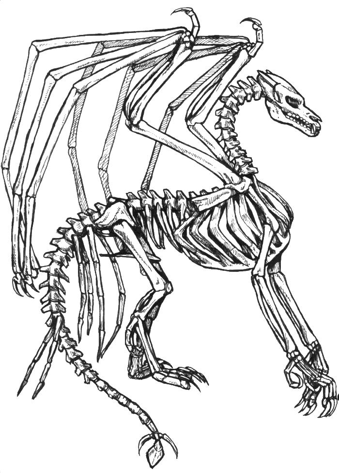 Dragon Skeleton Coloring Pages