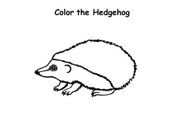 Drawing A Hedgehog Colouring Pages