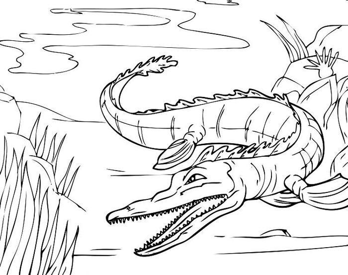 Drawing Alligator Coloring Pages