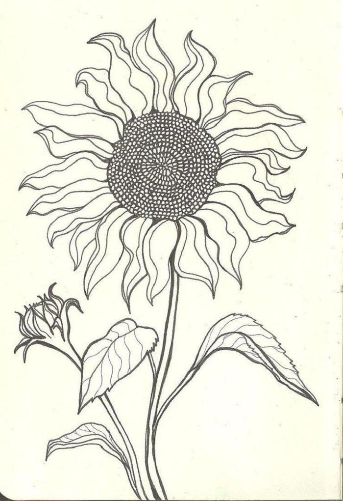 Drawings Sunflower Coloring Pages
