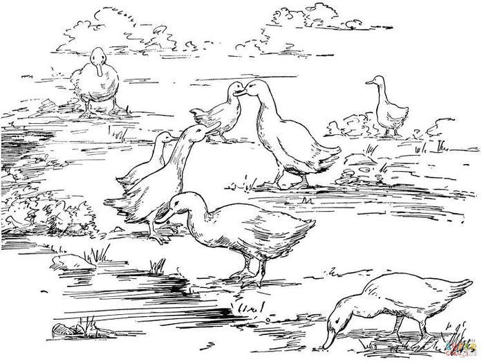 Duck Coloring Pages For Adults