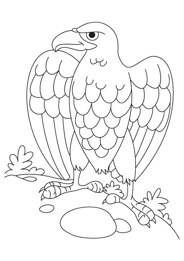 Eagle Coloring Pages For Kindergarten