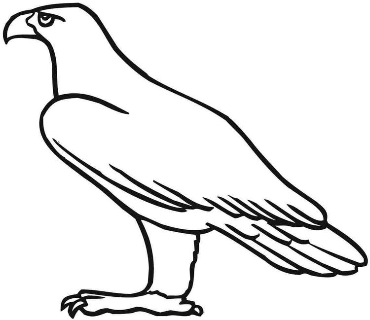 Eagle Coloring Pages For Toddler
