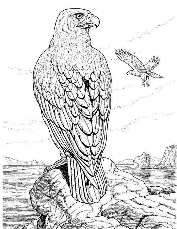 Eagle Coloring Pages Realistic