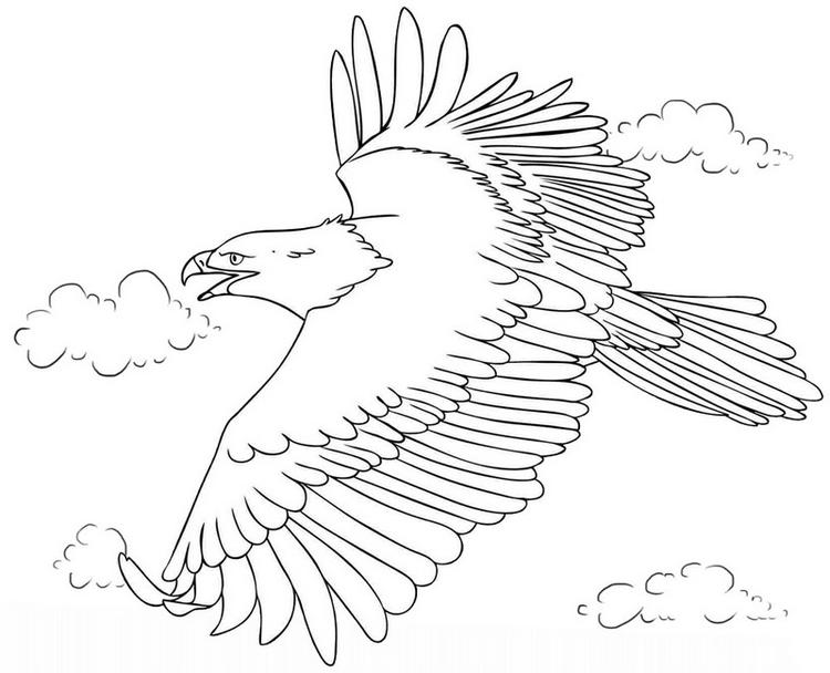 Eagle Flying High In The Sky Coloring Page