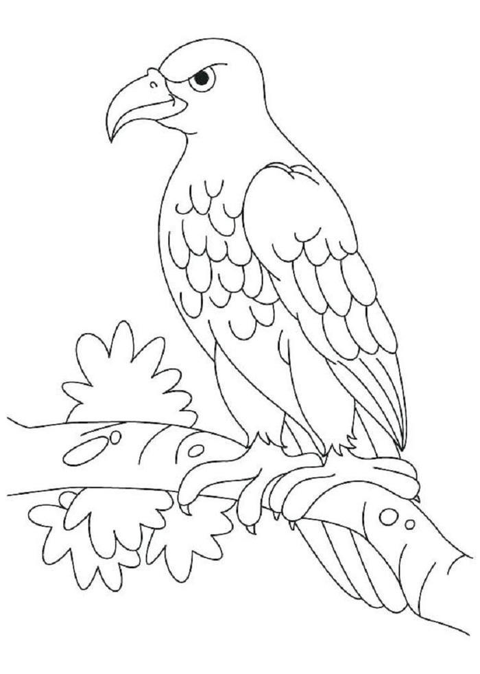 Eagles Animal Coloring Pages